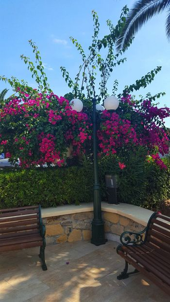 Bench Lamp Post Lamp Sky Greece GREECE ♥♥ Greece Photos Leros Leros Island Tree Flower Sky Plant Bougainvillea In Bloom Blooming Petal Botany Flower Head Plant Life Stamen Flowerbed Blossom Formal Garden