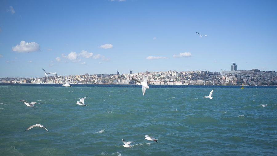 Bird Flying Animals In The Wild Sea Large Group Of Animals Sea Bird Flock Of Birds Beauty In Nature EyeEm Best Shots Kris Demey Photography Istanbul Bosphorus