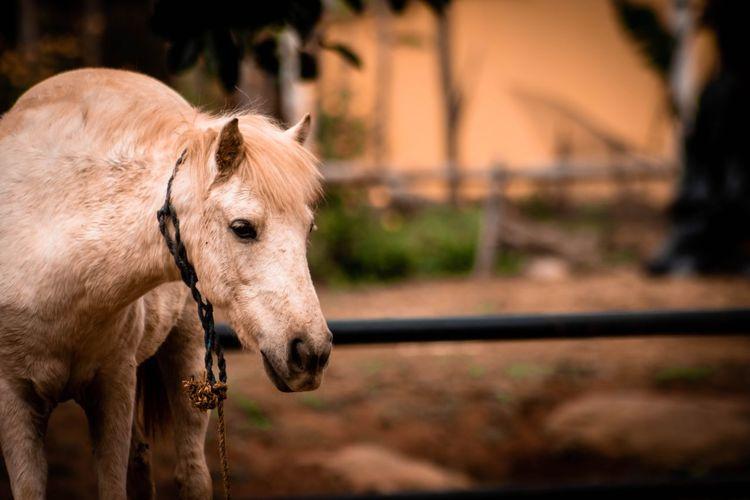 Close-up of pony at ranch