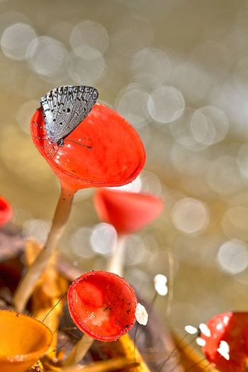 Beauty In Nature Close-up Day Focus On Foreground Fragility Freshness Nature No People Outdoors Red