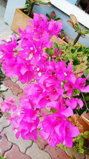 Flower Freshness Pink Color Petal Beauty In Nature High Angle View Flower Head Plant Nature Fragility No People Close-up Outdoors Day