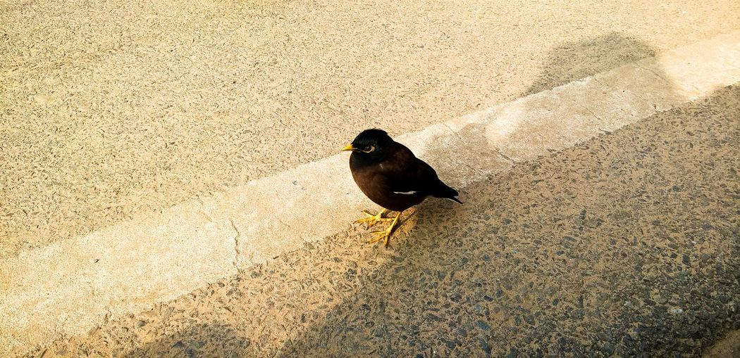 High angle view of bird perching on road