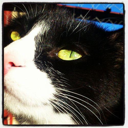 Busan Cat Close Up Katt Närbild