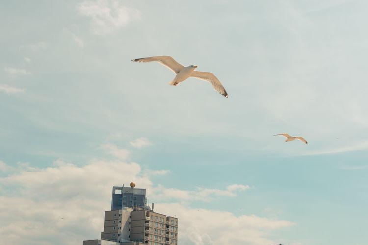 Human have a salt bae, but birds have Seagull Haag Hague Netherlands The Pier Vogel Animal Animal Wildlife At The Beach Bird Cloud - Sky De Pier Flying Holland Nature Sea Seagull Seemöwe Sky