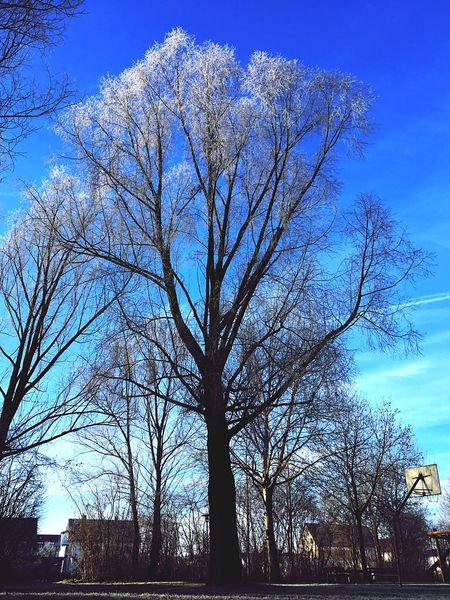 Playground tree Hoar Frost Hoarfrost Tree Bare Tree Sky Branch Nature Blue Tranquility Outdoors
