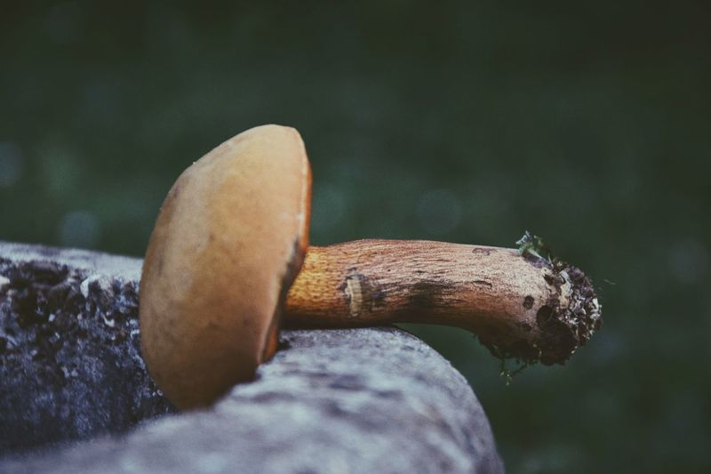 🌈 Outdoors Focus On Foreground Mushroom Beauty In Nature Day Urbanphotography Eye4photography  The Week On EyeEm EyeEmNewHere Freshness EyeEm Gallery
