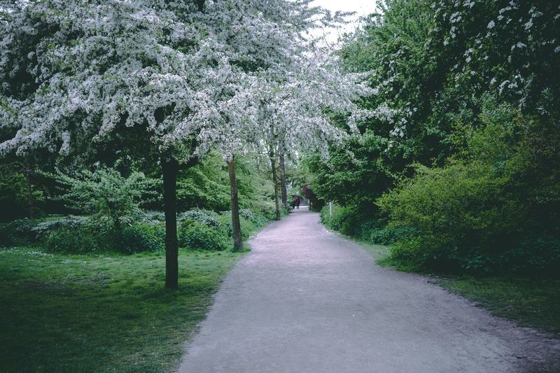 Follow the white trees White Green Walk Trees Nature Road No People Outdoors Freshness Flower Springtime Branch Grass