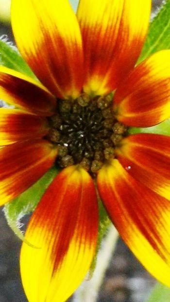 Natur!! Flowerporn Colour Of Life