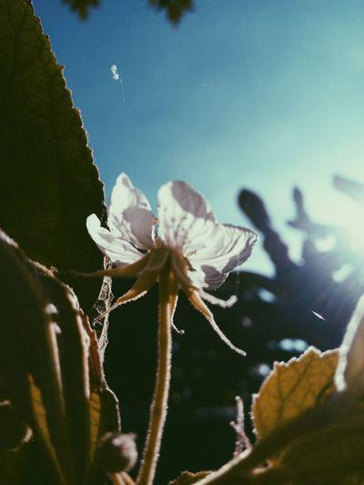 Nature Close-up