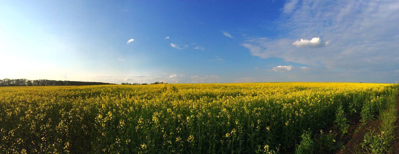 Nature On Your Doorstep Good Weather Summer Mothernature Fields Calm Blue Sky