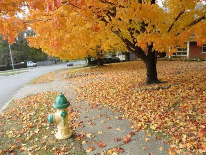 Nature Trees Autumn Fall Autumn Leaves No Edit Naturehippys Best Of Fall