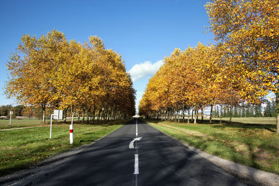 Autumn Autumn Colors Autumn Leaves Beauty In Nature Blue Cheverny Diminishing Perspective France Grass Green Color Loire Nature Outdoors Road Scenics Sky Sologne The Way Forward Tranquil Scene Tranquility Tree Tree Trunk Treelined