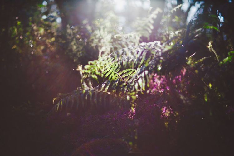 Beauty In Nature Canon 85mm F1.2 L Fern Fine Art Photography Garajonay National Park Gegenlicht Nature Poetic Photography Sunlight