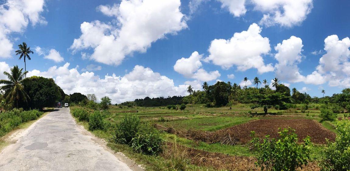 EyeEmNewHere Beauty In Nature Sky Landscape Scenics Tree Nature Zanzibar Pemba Swahili Coast East African Country East Africa