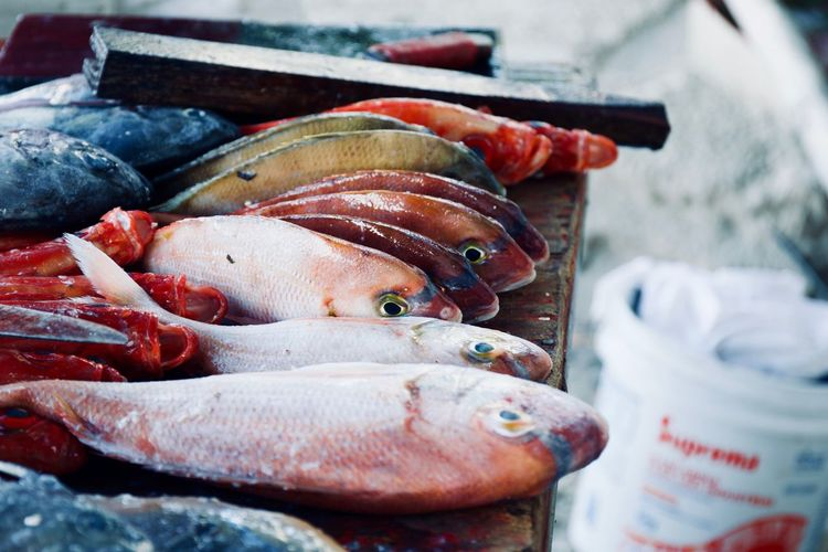 Close-up of fish for sale at market stall