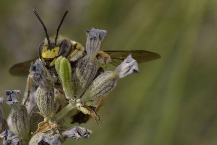 Ciudadreal Avispa Naturaleza Fascinante Naturelovers CastillaLaMancha Insecto Ciudadrealconencanto