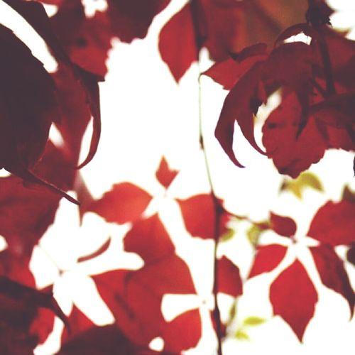 Fall Colors Fall Autumn Autumn Colors