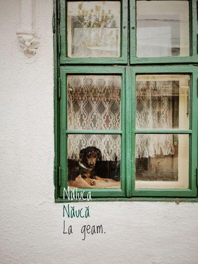 Portrait of window on building wall