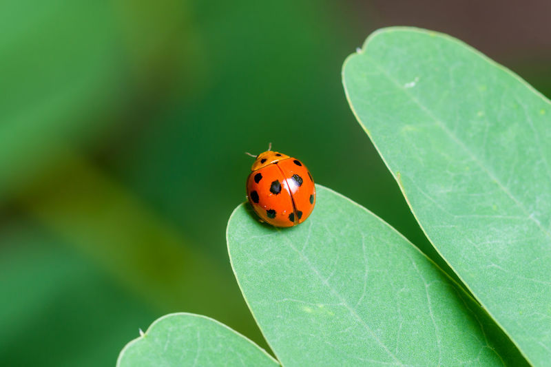 Close-up of ladybug on leaf