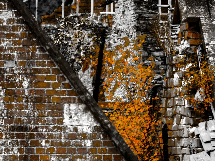 derelict Architecture Beauty In Nature Building Building Exterior Built Structure Close-up Day Focus On Foreground Growth Nature No People Outdoors Plant Staircase Tree Tree Trunk Trunk Wall - Building Feature Water Wood - Material