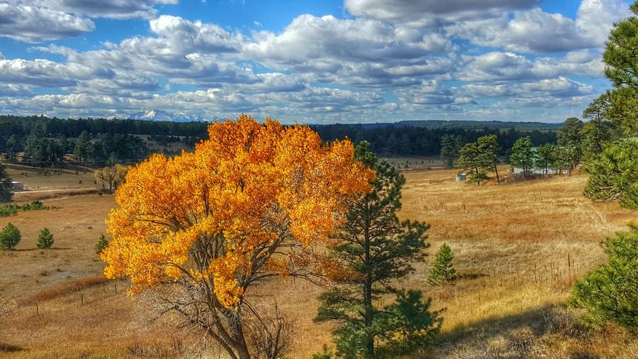 Colorado Nature Clouds Colorful Fall Fall Colors Fall Leaves Check This Out Samsung Galaxy S6 Edge Samsungphotography