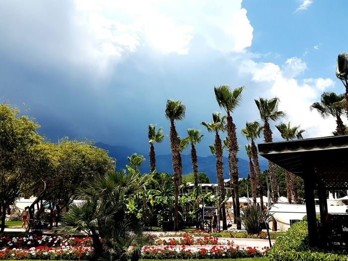 Kemer Turkey Nature's Diversities Nature Photography Nature On Your Doorstep Mountains Stormiscoming Palmtrees Limak Hotels Limak Limra Sky Sky And Clouds Sky_collection Chance Encounters The Great Outdoors - 2016 EyeEm Awards