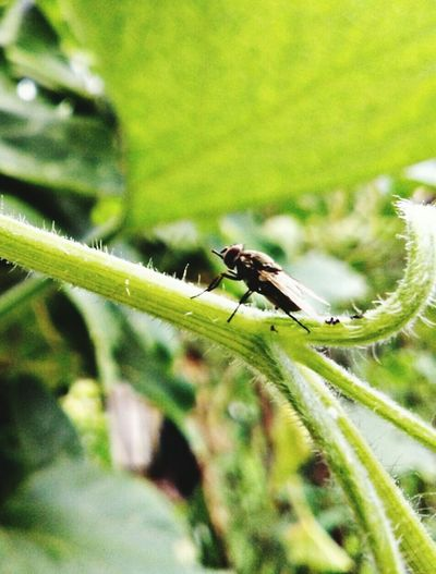 Damselfly Insect Colony Leaf Full Length Animal Themes Close-up Plant Green Color