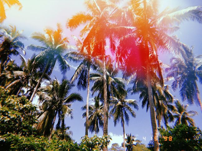 Thank You God for this wonderful creature. Tree Palm Tree Autumn Sky First Eyeem Photo