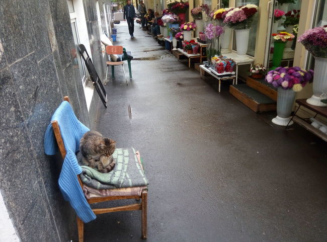 Cat and the flowers selling Chair Table Day Sitting Ukraine, Kharkiv Autumn🍁🍁🍁 Summer Passed Polytechnic Of Kharkiv Cats 🐱 Cat♡ Cats Of EyeEm Flowers Series Selling Flowers Street Photography Students Life Pet Portraits