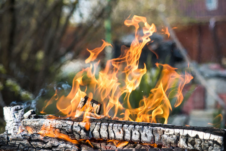 Close-up of fire against trees