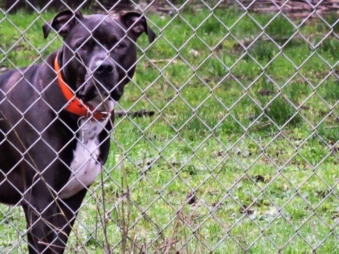 Dog on grassy field seen through chainlink fence
