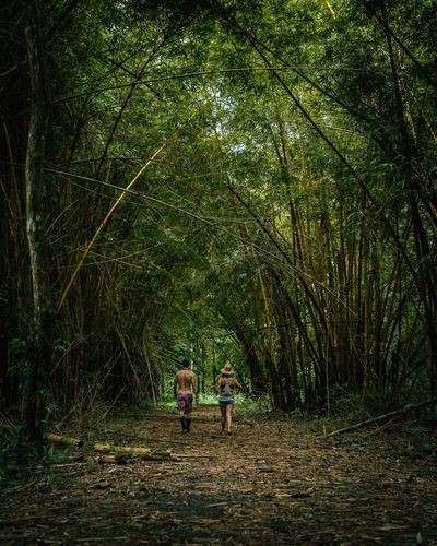 People standing by trees in forest