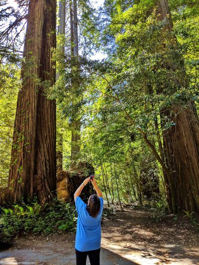 Rear view of woman photographing tree in forest