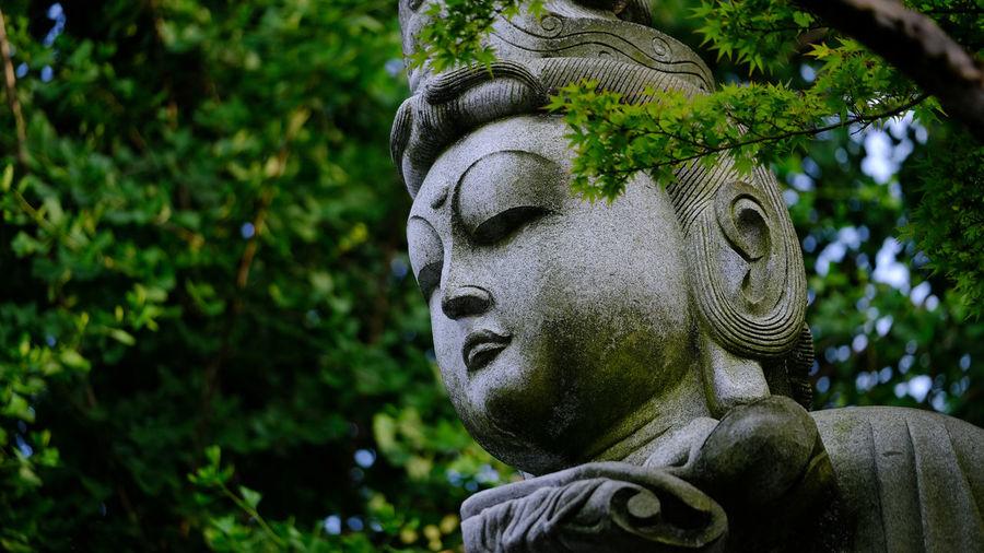 Art Buddha Close-up Creativity Focus On Foreground Fujifilm Fujifilm X-pro2 Fujifilm_xseries Green Color Growth Japanese Temple Low Angle View Nature No People Portrait Sculpture Statue Takahata Fudoson Temple Temple Tree X-PRO2 XF50-140mm
