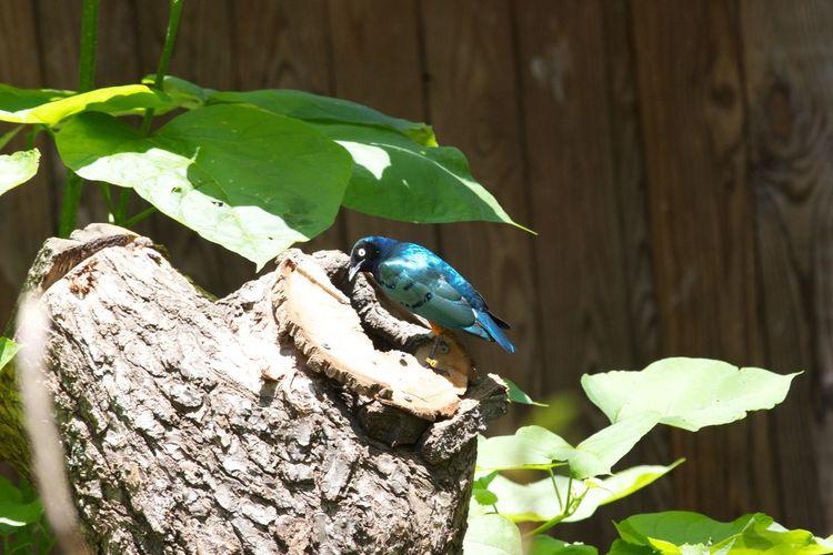 Bird perching on tree stump