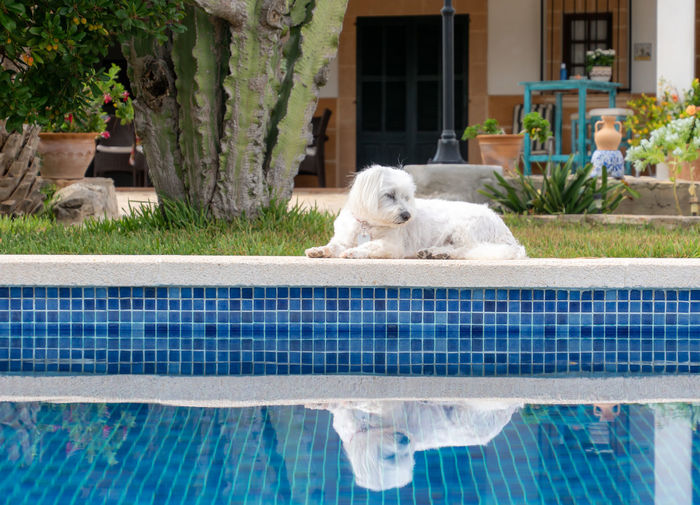 Dog relaxing in swimming pool