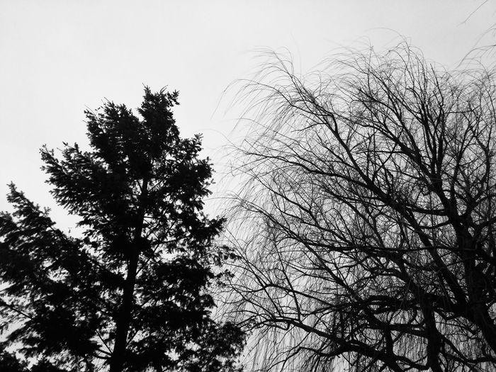 Tree Nature No