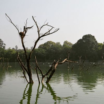 At hauz khas village lake Lonely Tree Algaedeposition :P