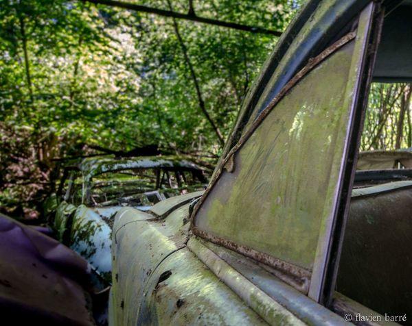 Tree Nature Forest Urbex car