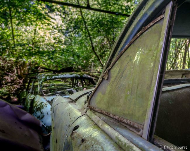 Tree Nature Forest Urbex car