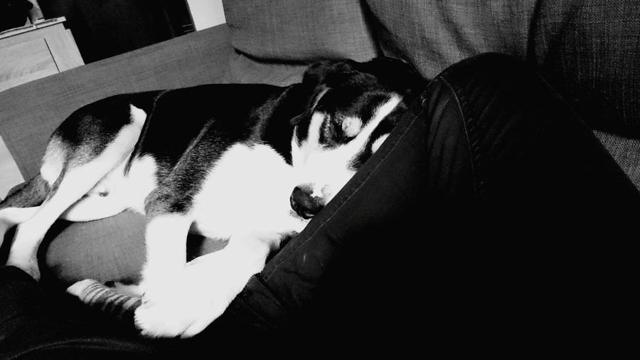 Dog Blackandwhitephotography Black & White Blackandwhite Photography Black&white Black And White Photography Ilovemydog I Love My Dog Chien Dogs Dog Sleeping