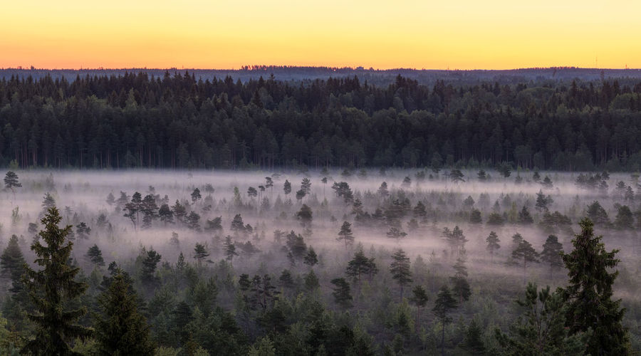 Morning fog and sunrise in Torronsuo National Park, Finland Finland Morning National Park Swamp Tree Atmospheric Mood Beauty In Nature Dawn Fog Forest Hazy  Idyllic Landscape Mist Nature Night No People Outdoors Scenics Sky Summer Sunrise Sunset Tranquil Scene Tranquility