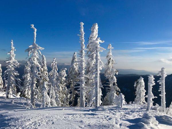 Bayerischer Wald Winter Wonderland Winter Cold Temperature Sky Snow Blue Nature No People Frozen Outdoors