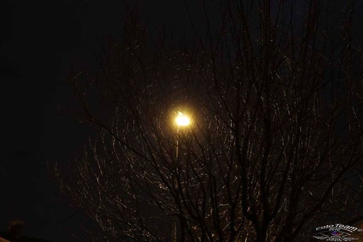 Scorgi tra i rami la luce... Night Nature No People Illuminated Canon1100D;) Outdoors