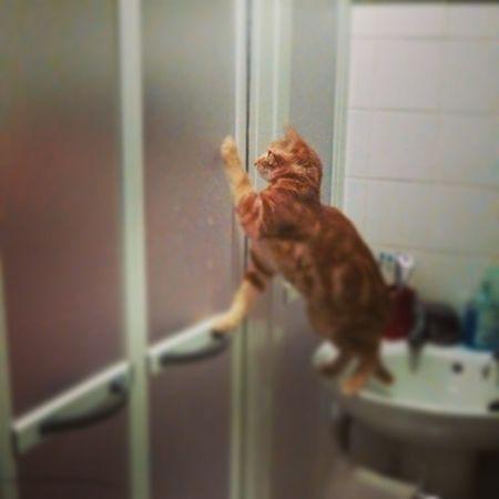 Poor Wife doesn't even get 5 minutes to herself in the shower Benjaminkitten Mental Cat catz instagram instafollow instalove photooftheday kitten baby babyboy shower funny