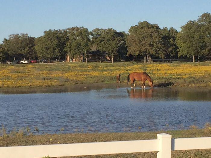 Iᖴ YOᑌ ᒪIᐯE TO ᗷE 100 I ᕼOᑭE TO ᒪIᐯE TO ᗷE 100 ᗰIᑎᑌᔕ OᑎE ᗪᗩY ᔕO I ᑎEᐯEᖇ ᕼᗩᐯE TO ᒪIᐯE ᗩ ᗪᗩY ᗯITᕼOᑌT YOᑌ - ᗯIᑎᑎIE TᕼE ᑭOO First Eyeem Photo Horse