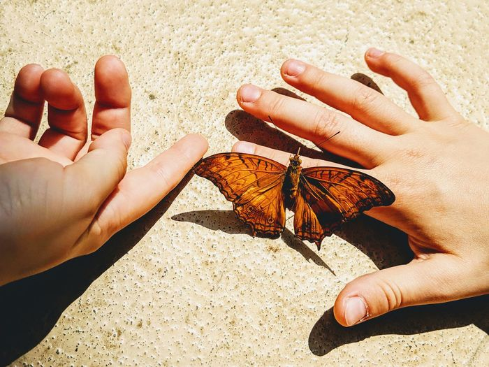 Midsection of butterfly on hand