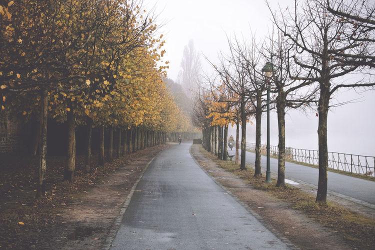 Autumn Bonn Herbst Misty Nebel Rhein Rhine Weather Cold Fall Fog Foggy Germany Haze Mist Water