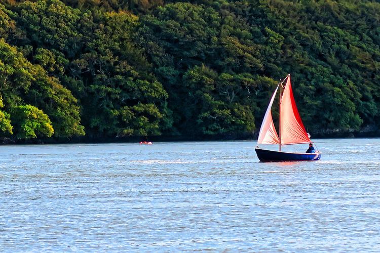 Boat sailing on river against trees