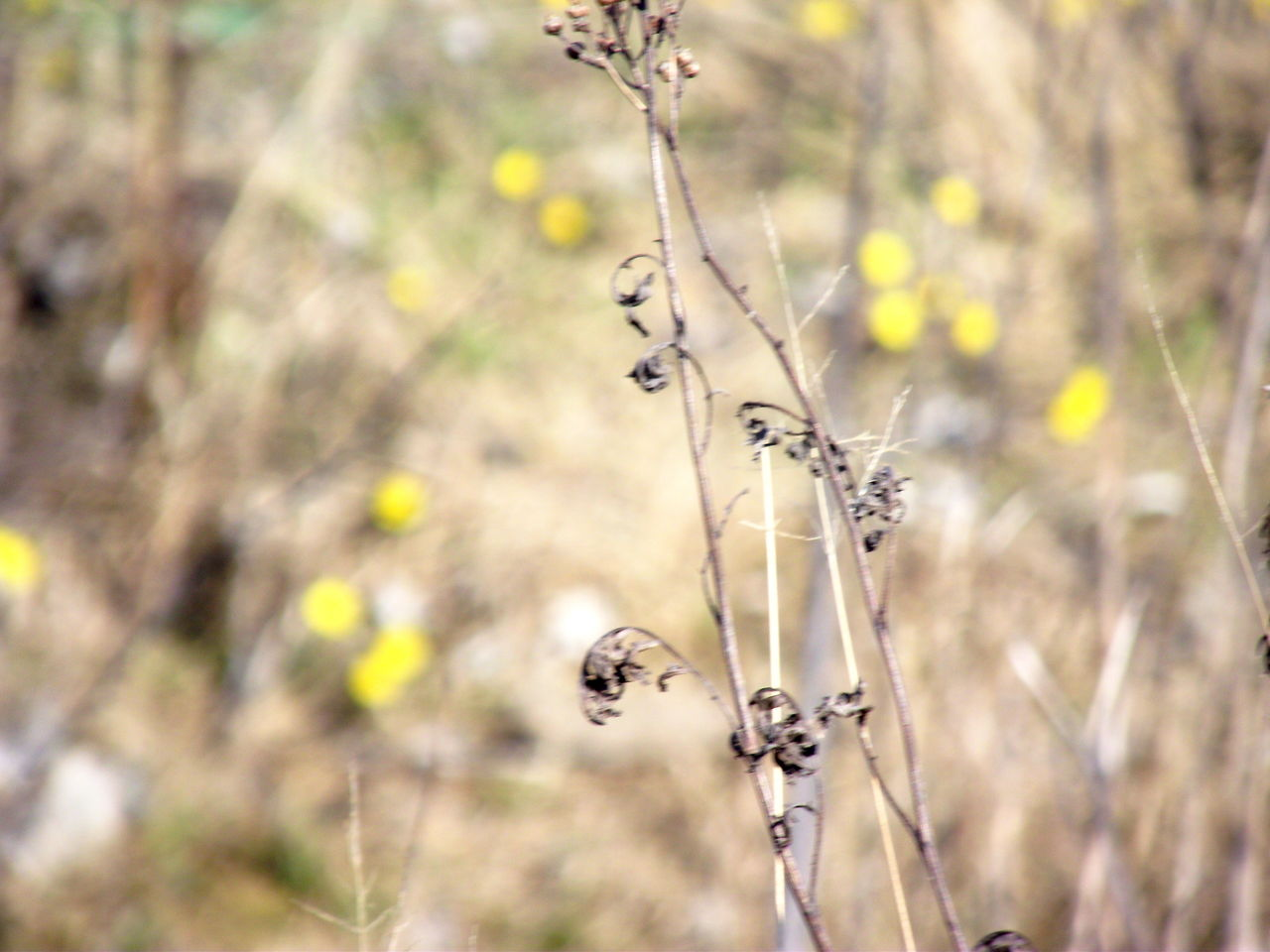 plant, focus on foreground, nature, no people, day, growth, close-up, tranquility, land, dry, beauty in nature, outdoors, plant stem, field, fragility, selective focus, vulnerability, flower, animal wildlife, animals in the wild, wilted plant